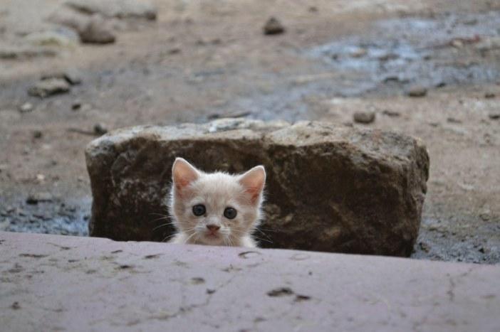 顔を出す子猫
