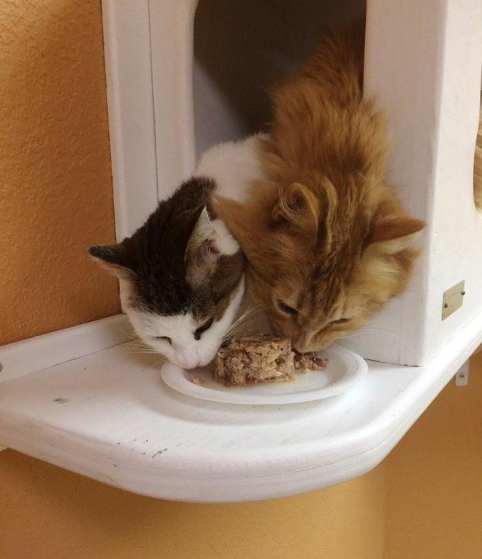 一緒に食べる猫