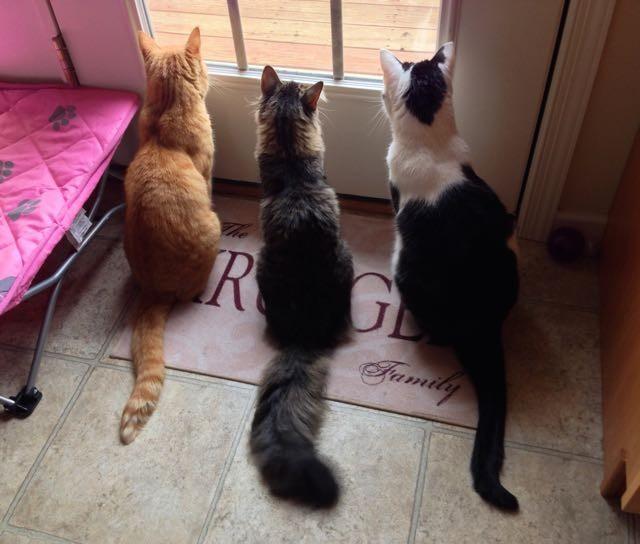 窓の外を見る猫達