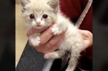 足が麻痺した子猫
