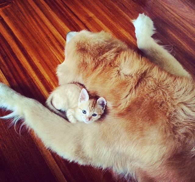 犬に抱きつく子猫