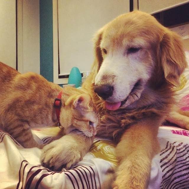 いつも一緒の犬と子猫