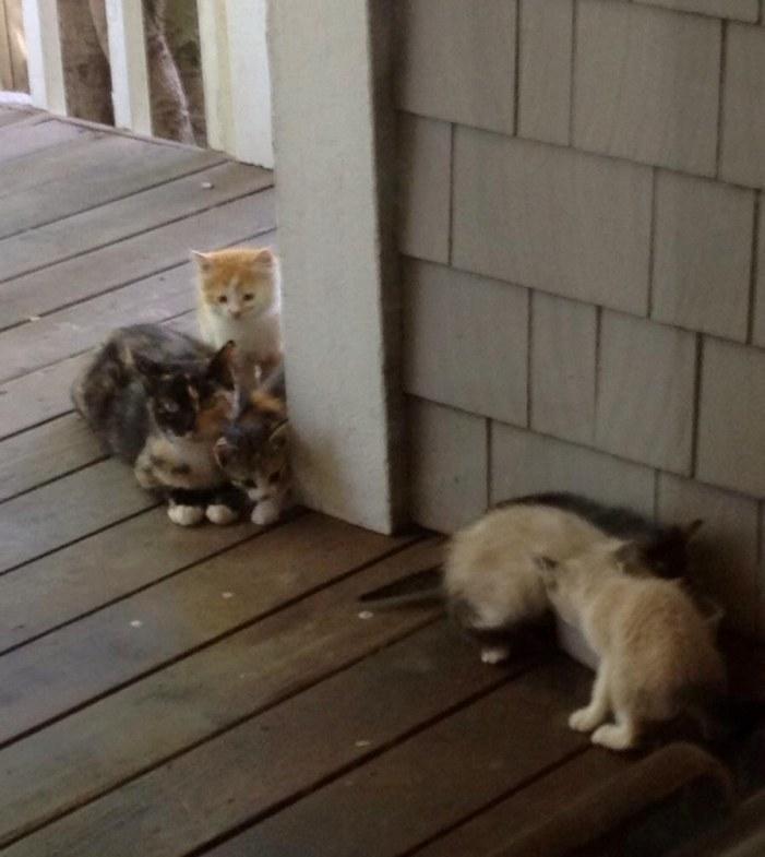 家に来た子猫達