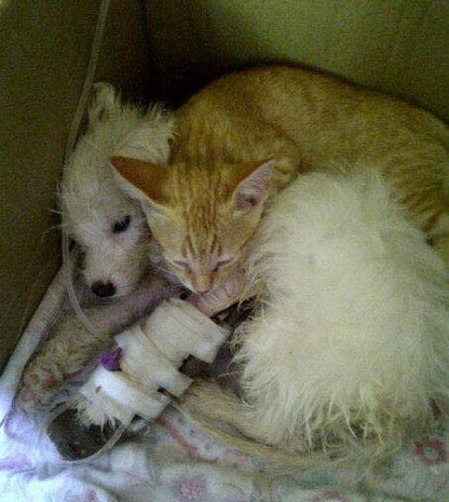 犬を抱きしめる猫
