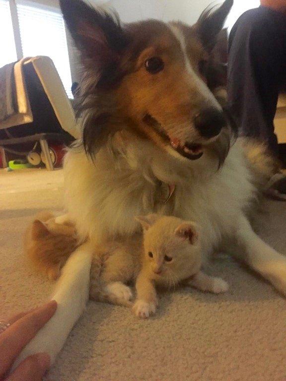 子猫が大好きな犬