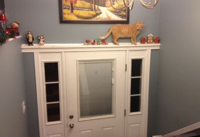 戸棚の上の猫