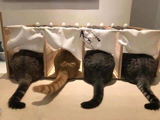 のれんと猫