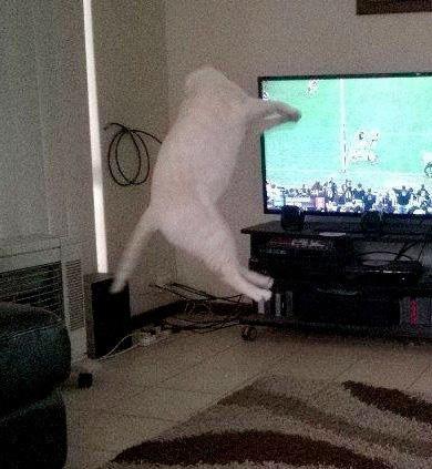 スーパージャンプ猫