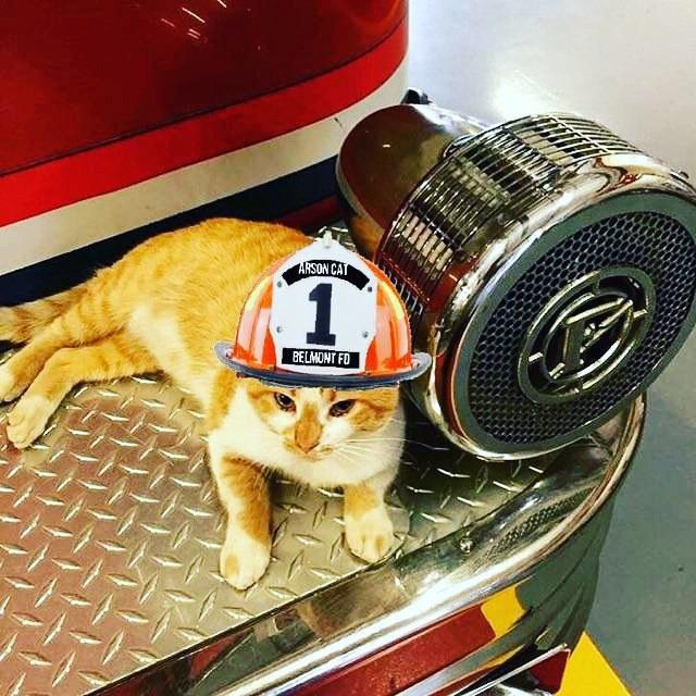 帽子をかぶる猫