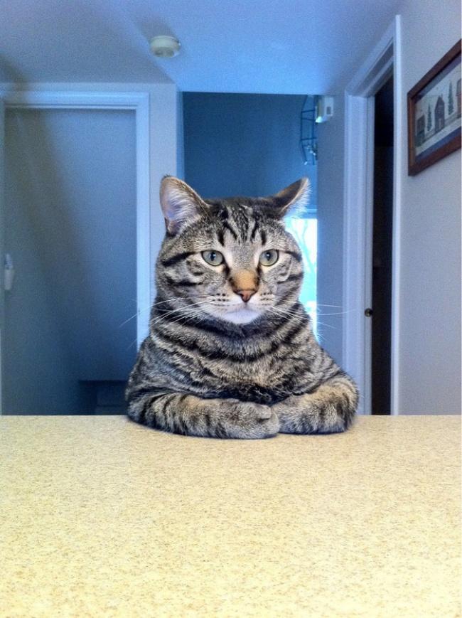 納得する猫