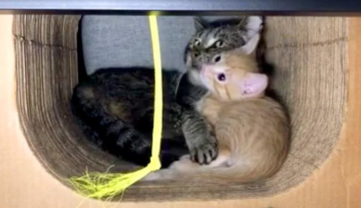 子猫を守るおじいちゃん