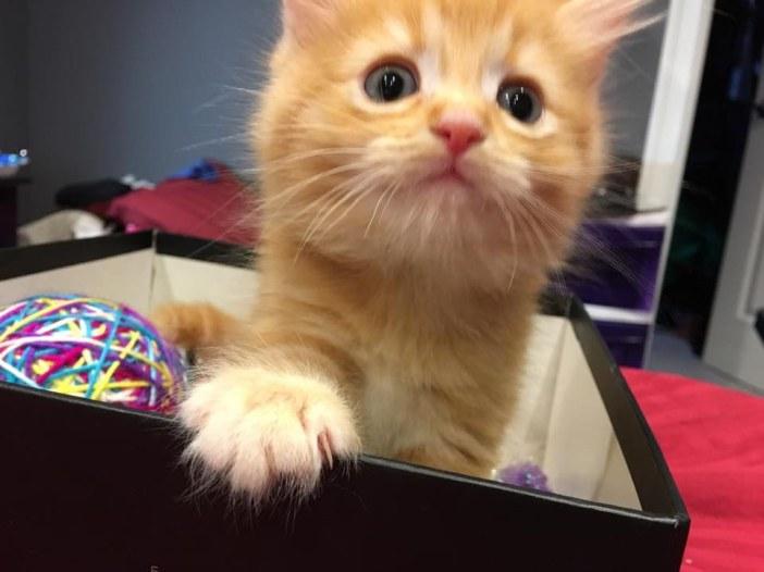 手の乗っける子猫