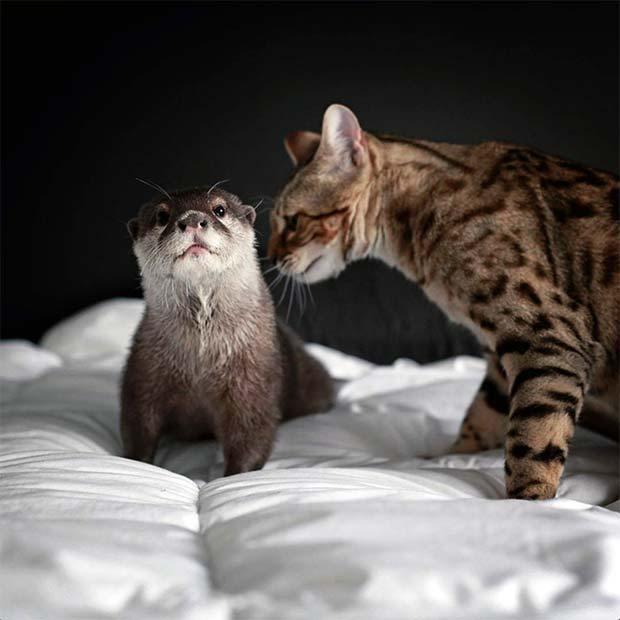 気になる猫とカワウソ