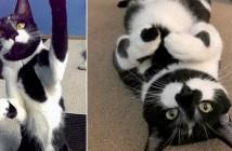 いたずら好きの猫