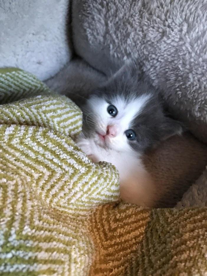 まったり子猫
