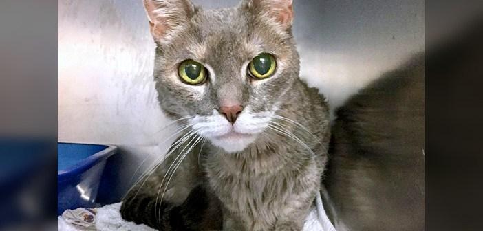 目と耳に障がいを持つ猫