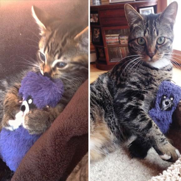 不思議なぬいぐるみと猫
