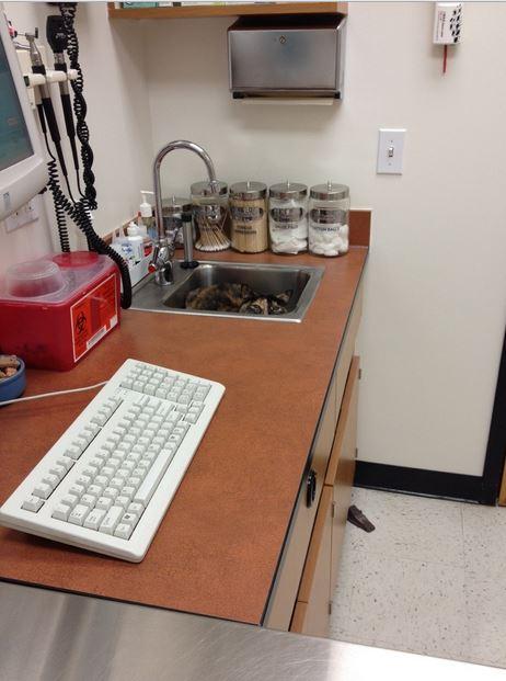 動物病院の猫
