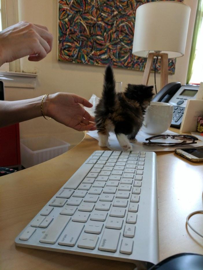 移動する子猫