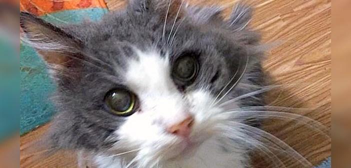 19歳の老猫
