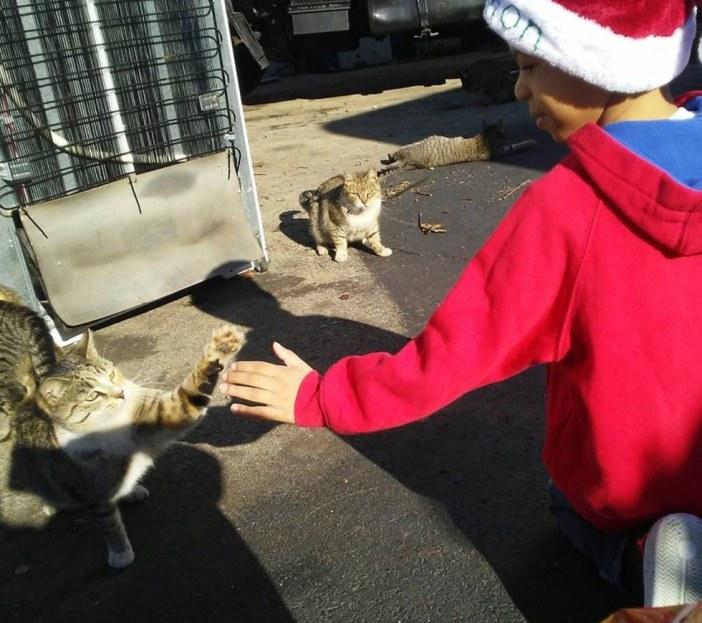 猫とハイタッチする少年