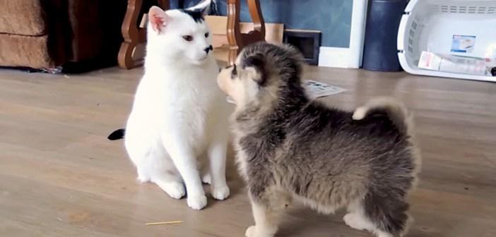初めて会った猫と子犬