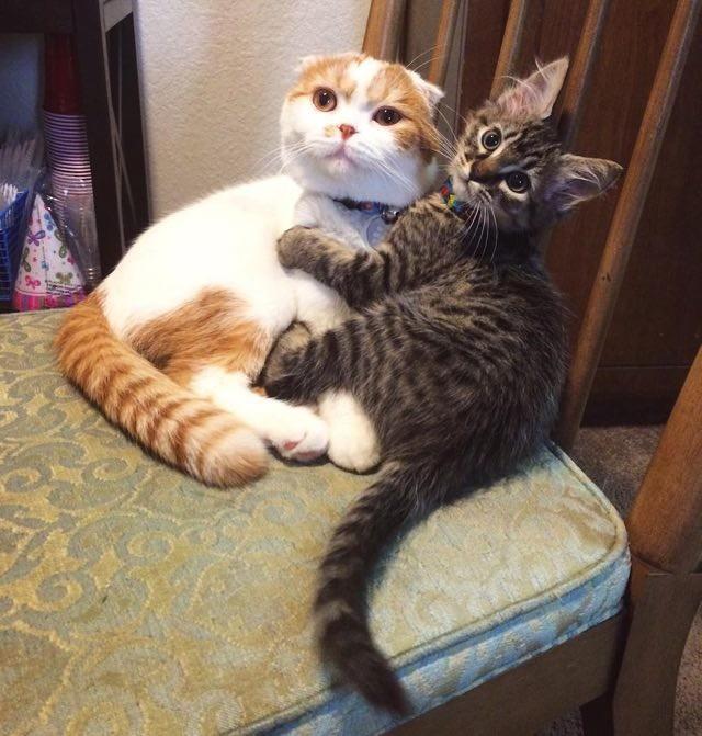 ぎゅっとする猫
