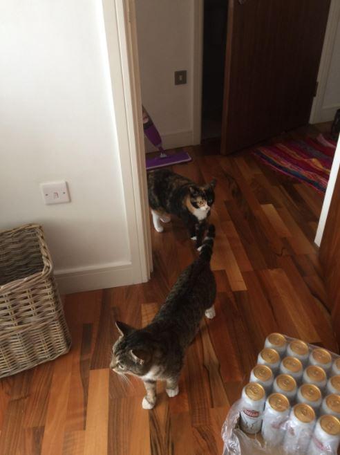 友達と遊ぶ猫