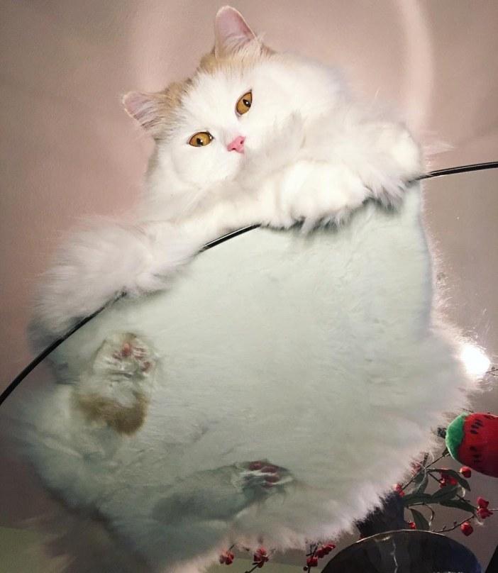 ガラステーブルと猫