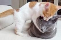 先住猫と遊びたい子猫