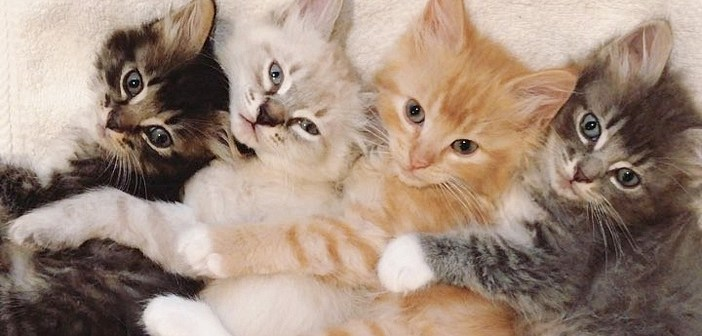 一緒に眠る子猫達