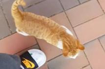 何度もついてくる猫
