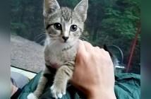 キャンプ場で保護された猫