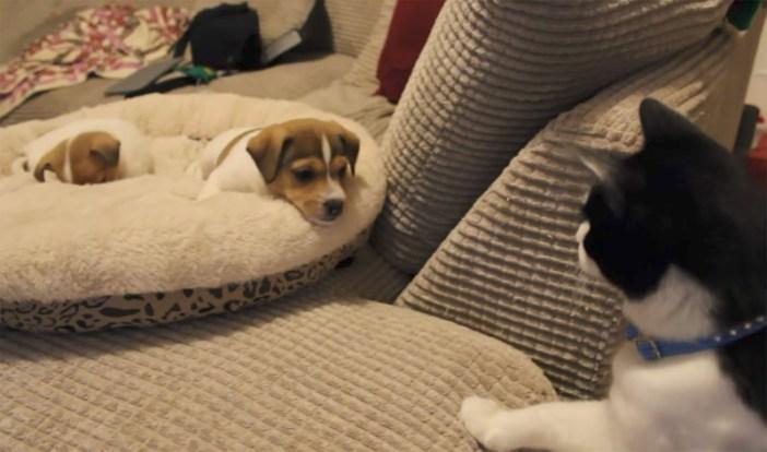 犬と初対面