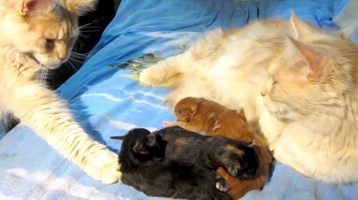子猫を触る父猫