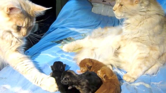 父猫を睨む母猫