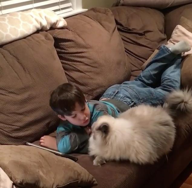 男の子が好きな猫