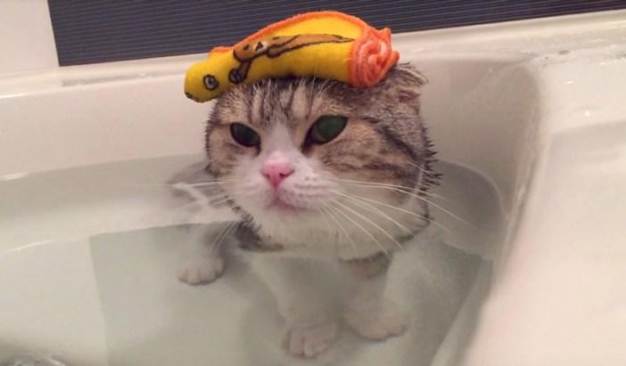 まったりする猫