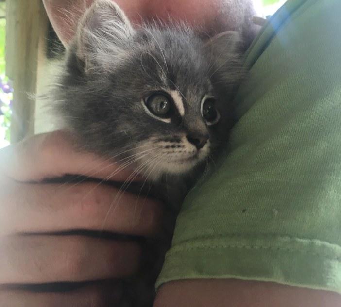 子猫を抱きしめる女性