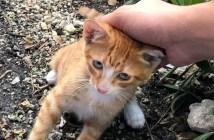助けを求めてきた子猫