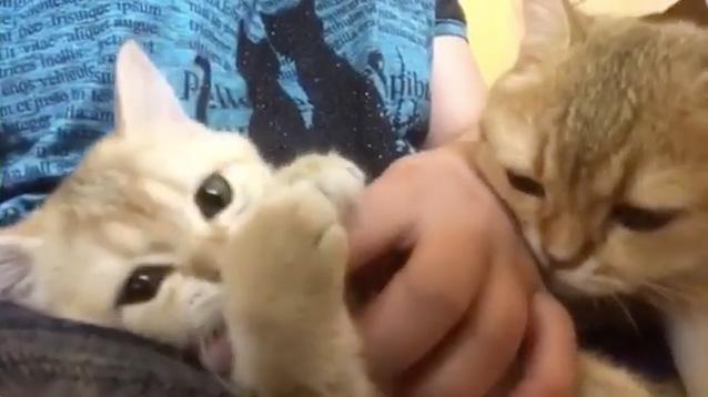 スリスリする母猫
