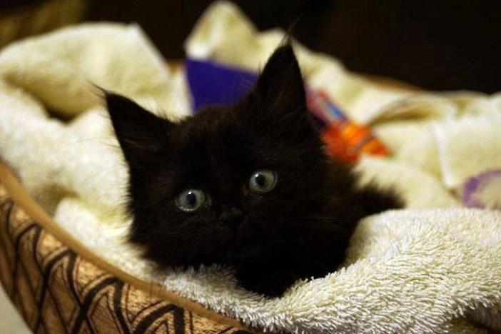 じっと見る子猫