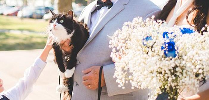 結婚式の猫