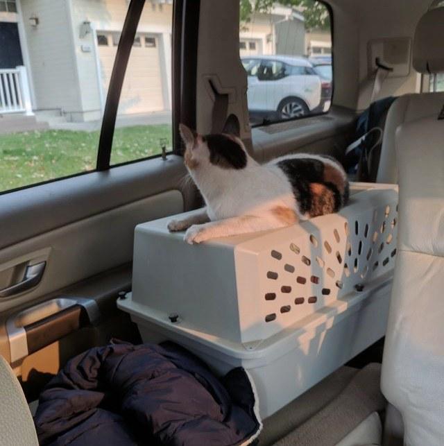 車の外を見つめる猫
