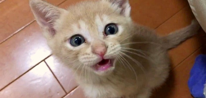 催促する子猫
