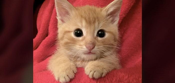保護した子猫
