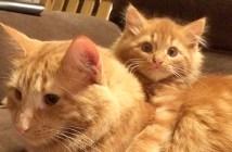 似ている2匹の猫