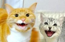 名前を覚えた猫