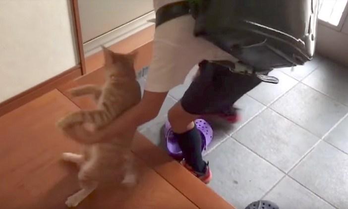 猫を避ける男の子