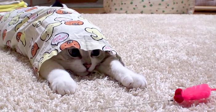 パジャマの中の子猫